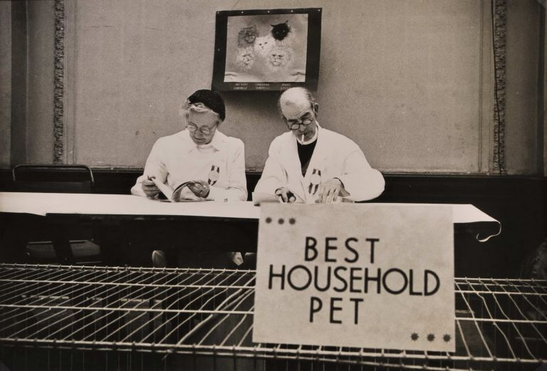 Best Household Pet – [Crufft's] Cat Show, London. David Potts, Aust.