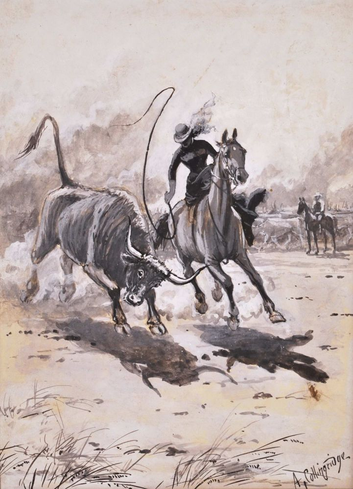 [Side-saddle Muster]. Arthur Collingridge, Aust.