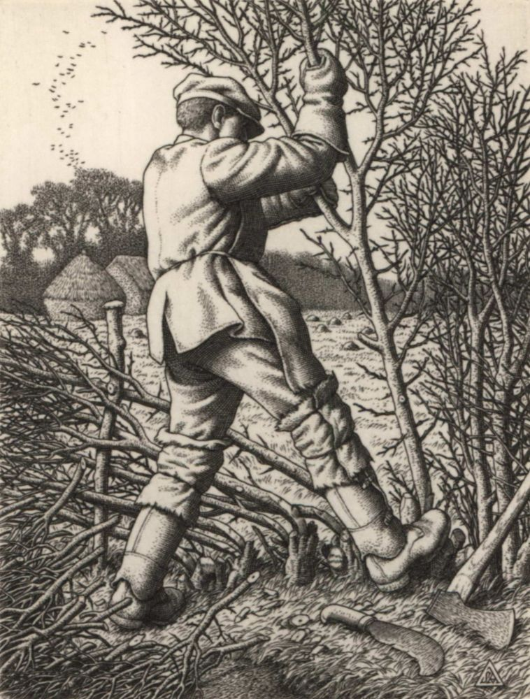 Hedge-Laying. Stanley Anderson, British.