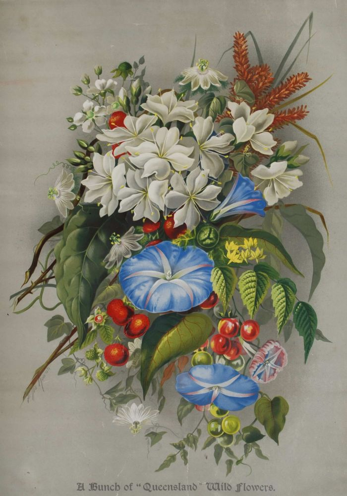 [Australian Flora And Fauna Supplements]. Ellis Rowan, Aust.