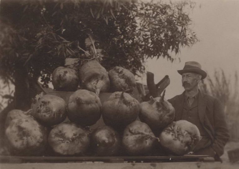 Ready For The Show [Man With Large Beets]