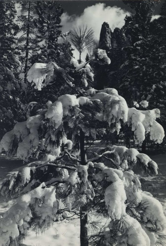 [Cathedral Spire And Snow Covered Trees, Yosemite Valley]. Ansel Adams, American.