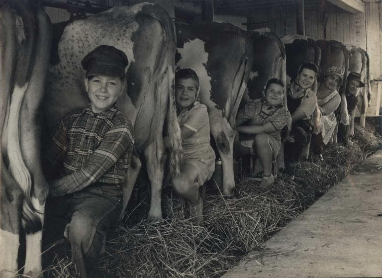 Row of Cows' Rumps, With Fat-Cheeked Family Of Six Milking Them, In Neat Cow Barn [Wisconsin]. Alfred Eisenstaedt, German/Amer.
