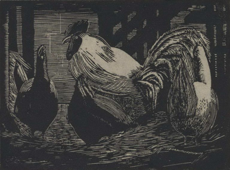 Rooster And Hens. Rah Fizelle, Aust.
