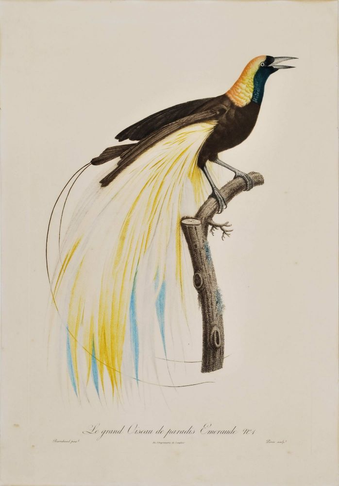 [Birds Of Paradise And Toucans]. After Jacques Barraband, c1767–1809 French.