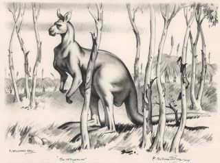 The Kangaroo. Frederick Millward Grey, Aust