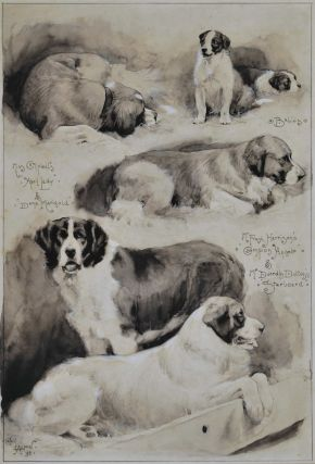 "Miss Campbell's ""April Lady"" & ""Dame Marigold"" Babies, Mr Frank Harrison's ""Champion Angelo"" & Mr Duerdin Dutton's ""Starboard"" [St Bernard Dogs], Cecil Aldin, Brit."