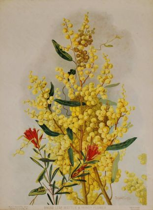 Broad Leaf Wattle & Honey Flower. Margaret Flockton, Australian