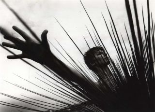 [Model With Spiny Plant]. Laurence Le Guay, Aust.
