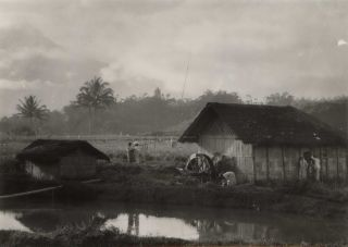 Java. Typical Country Scene. E O. Hoppé, 1878- 1972 Brit