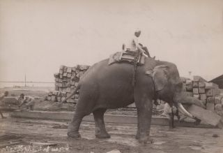 Burma. Elephants Moving Teak Logs Just Outside Rangoon and Burma. Elephants Piling Teak Logs
