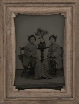 Two Japanese Girls With Bonsai