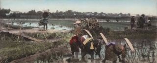 Japanese Workers In Rice Paddy