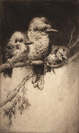 Three Kookaburras. Thomas Friedensen, Brit./Australian