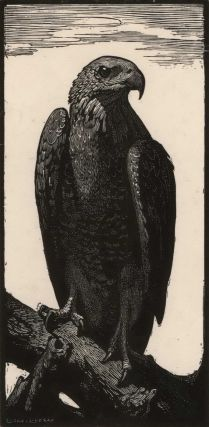 The Brown Hawk. Lionel Lindsay, Aust