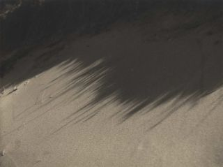 Sea Grass Shadows On The Sand]. Olive Cotton, Aust