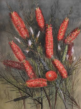 Narrow-leaved Bottle Brush. Ellis Rowan, Australian