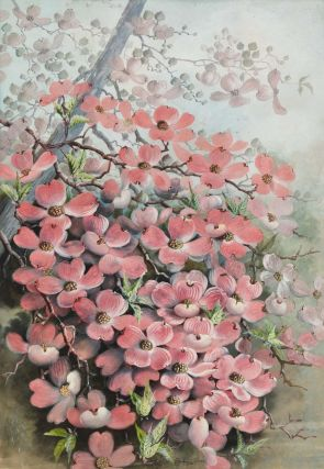 Flowering Dogwood]. Ellis Rowan, Aust