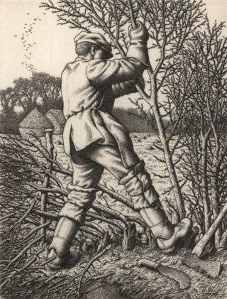 Hedge-Laying. Stanley Anderson, British