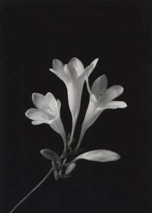 Freesia]. Paul Jones, Aust