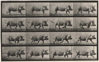 Animal Locomotion, Plate 675 [Running Pig]. Eadweard Muybridge, 1830- 1904 Brit