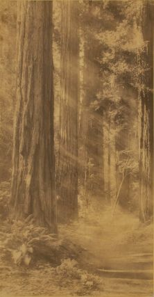 Redwoods At Muir Woods, San Francisco]. Willard Worden, American