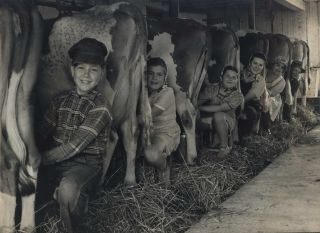 Row of Cows' Rumps, With Fat-Cheeked Family Of Six Milking Them, In Neat Cow Barn [Wisconsin]....