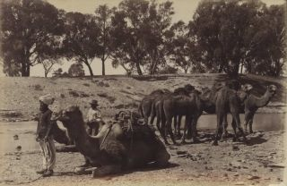 Afghan Camel Teams, Wilcannia, NSW