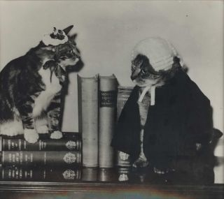 Pussito and Vaska Brodsky [Cats Of Law]. Marjorie Proctor-Brodsky, 1898–1985 Aust