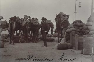 Blinman Mine, South Australia [Camel Train With Supplies
