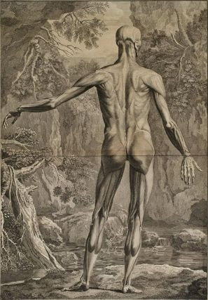 Anatomical Studies: Posterior Plane]. After Jan Wandelaar, 1690–1759 Dutch