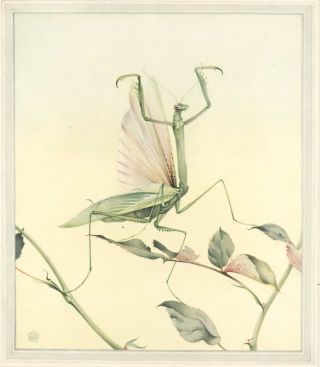 Fabre's Book Of Insects [Illustrations By E.J. Detmold