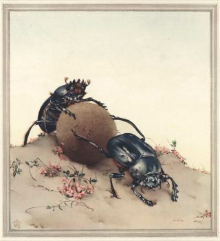 Fabre's Book Of Insects [Illustrations By E.J. Detmold]