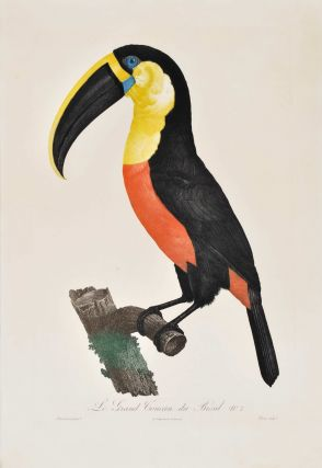[Birds Of Paradise And Toucans]